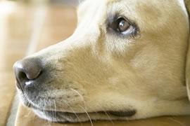 外来希望の飼い主様/地域獣医療従事の皆様へのイメージ