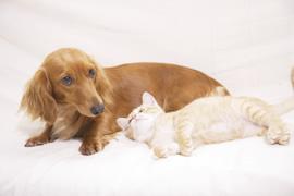犬、猫の白内障とはのイメージ